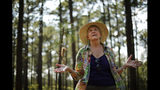 """Julie Moore, a fierce opponent of de-listing the red-cockaded woodpecker from the endangered species list, visits the bird's habitat in a long leaf pine forest at Fort Bragg in North Carolina on Tuesday, July 30, 2019. In the 1980s and 1990s, efforts to save the woodpecker and their trees set off a backlash among landowners who worried about interference on their private property. """"I've been run off the road. I've been shot at,"""" says Moore, a former Fish and Wildlife Service woodpecker official. (AP Photo/Robert F. Bukaty)"""