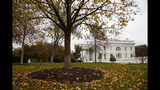 Fall foliage covers the North Lawn of the White House, Wednesday, Nov. 20, 2019, in Washington, as a public impeachment hearing of President Donald Trump's efforts to tie U.S. aid for Ukraine to investigations of his political opponents begins. (AP Photo/Jacquelyn Martin)