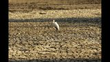 """FILE - In this Oct, 27, 2019 file photo, a bird stands on a sun-baked pool that used to be a perennial water supply in Mana Pools National Park, Zimbabwe. The chair of the two-week COP25 climate summit attended by nearly 200 countries warned at its opening Monday Dec. 2, 2019 that those refusing to adjust to the planet's rising temperatures """"will be on the wrong side of history."""" (AP Photo/Tsvangirayi Mukwazhi, File)"""