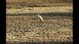 En esta imagen de archivo, tomada el 27 de octubre de 2019, un pájaro se posa sobre un terreno agrietado por la sequía, en el Parque Nacional Piscinas de Maná, Zimbabue. (AP Foto/Tsvangirayi Mukwazhi, archivo)